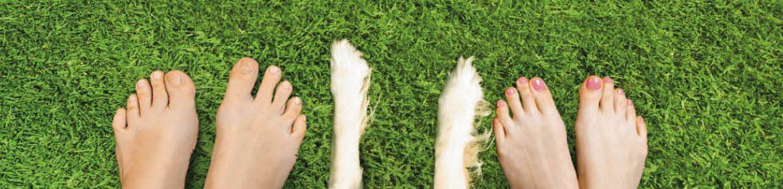 Gräset är redo att sätta fart och i stora delar av landet är det redan hög tid att ge gräsmattan de allra bästa förutsättningarna. Med Azet VitalKalk och Effekt Gräs 5+1 får din gräsmatta allt den behöver.