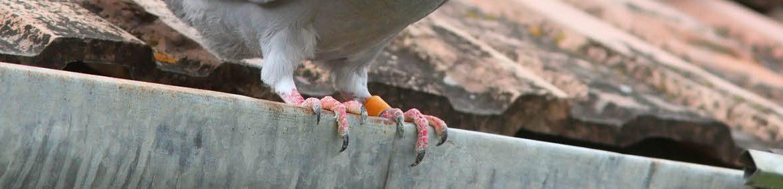Fåglar i stort antal skräpar snabbt ner och skräniga måsar stör lugnet i trädgården. Med Greenlines kompletta serie Mot Fågel hålls fåglarna på avstånd – oavsett var problemet dyker upp.