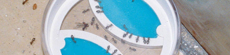 Få bukt med myrproblemen både inne och ute med Neudorffs kompletta system Myr Effekt – välj det som passar just dig och dina behov bäst; dosor, spray eller pulver. Ute eller inne.